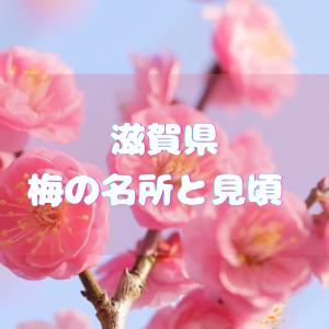 滋賀県の梅の名所